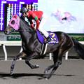 Photos: リワードアヴァロン 返し馬(19/12/28・高知市長賞典 第41回 金の鞍賞)