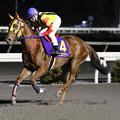 Photos: レインズパワー 返し馬(19/12/28・高知市長賞典 第41回 金の鞍賞)