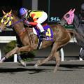 Photos: レインズパワー レース(19/12/28・高知市長賞典 第41回 金の鞍賞)