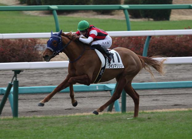 ウインマリリン レース(19/12/21・新馬戦)