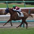 Photos: ウインマリリン レース(19/12/21・新馬戦)