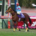 Photos: ブライトクォーツ 馬場入場(19/12/21・第142回 中山大障害)
