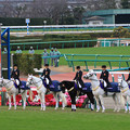 第142回 中山大障害 誘導馬(19/12/21)