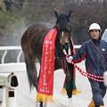 Photos: ニュータウンガール_1(19/12/30・第23回 ライデンリーダー記念)