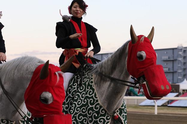 川崎競馬場 誘導馬_3(20/01/02・大師オープン)