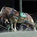 Photos: アアモンドボス レース(19/11/02・5R)