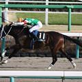 スプリングボックス レース(20/01/11・中山新春ジャンプステークス)