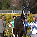 スプリングボックス_2(20/01/11・中山新春ジャンプステークス)