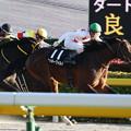 Photos: ミッキーワイルド レース(19/11/17・霜月ステークス)