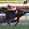 オセアグレイト レース(20/01/11・迎春ステークス)