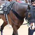 Photos: スワーヴアラミス  パドック(20/01/12・ポルックスステークス)