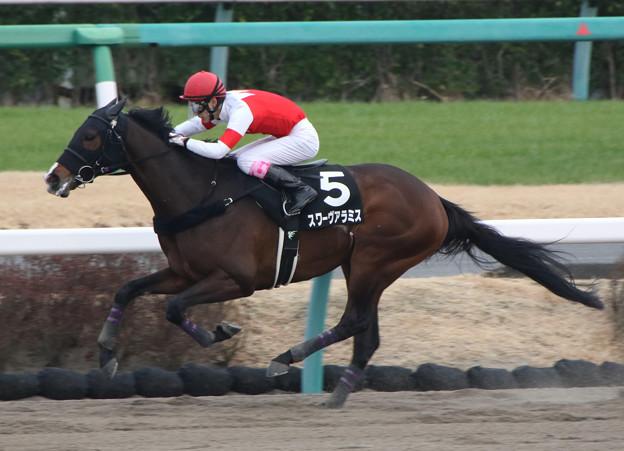 スワーヴアラミス レース(20/01/12・ポルックスステークス)