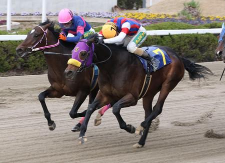 コスモバレット レース(20/01/17・JA兵庫西アグリドリーム賞)