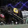 Photos: コマサンダイヤ レース(19/11/03・5R)