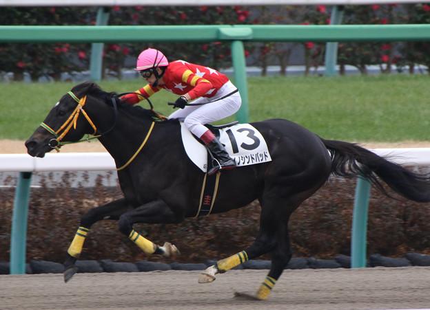 ユイノシンドバッド レース(20/01/12・4R)