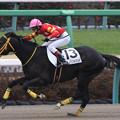 Photos: ユイノシンドバッド レース(20/01/12・4R)