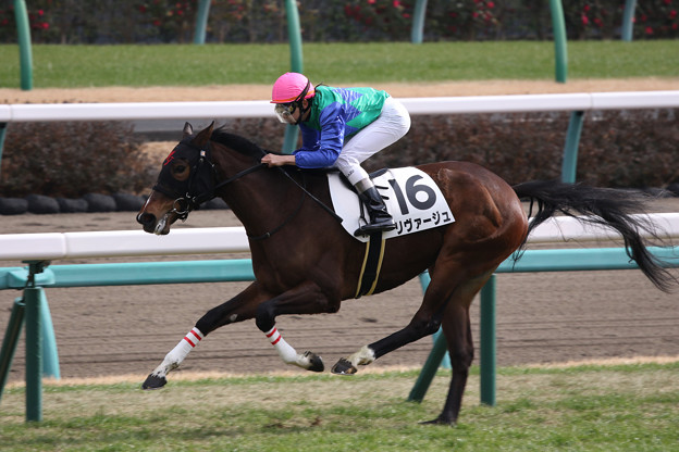 リヴァージュ レース(20/01/12・新馬戦)