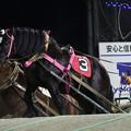 Photos: ウンカイタイショウ レース(19/02/03・9R)