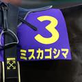ミスカゴシマ(20/01/19・山口シネマ杯 第61回 花吹雪賞)
