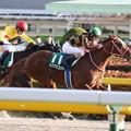 モズアスコット レース(20/02/02・第34回 根岸ステークス)