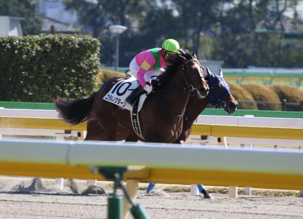 コラルノクターン  レース(20/02/02・新馬戦)