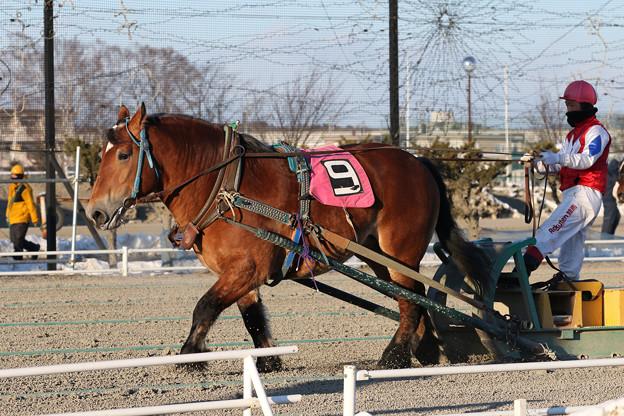 カイセタイホウ レース(20/02/09・6R)