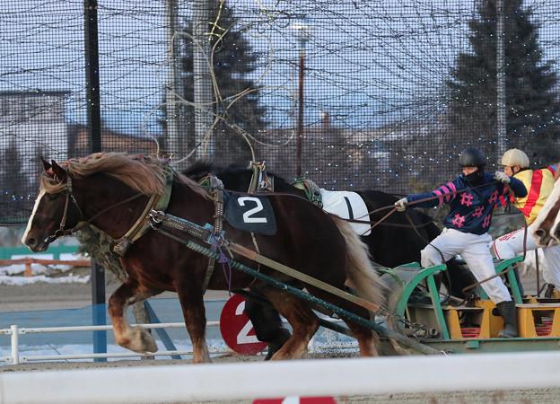 フナノギムレット レース(20/02/09・8R)