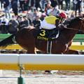 Photos: カフェファラオ レース(20/02/23・ヒヤシンスステークス)