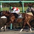 Photos: ショウナンカイドウ レース(20/01/11・頌春賞)