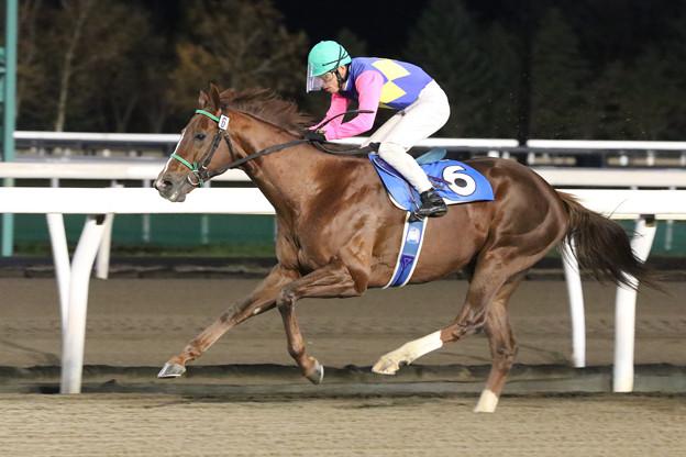 モルトベーネ レース(19/11/07・北海道厩務員会特別)
