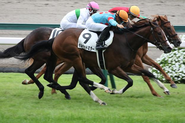ギルデッドミラー  レース(19/07/13・新馬戦)
