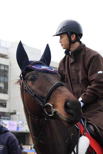 京都競馬場 誘導馬_3(19/02/10)