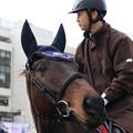 Photos: 京都競馬場 誘導馬_3(19/02/10)