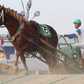 Photos: コウシュハウンカイ レース(12/08/26・6R)