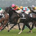 Photos: キャプテンベガ レース(06/03/18・若葉ステークス)