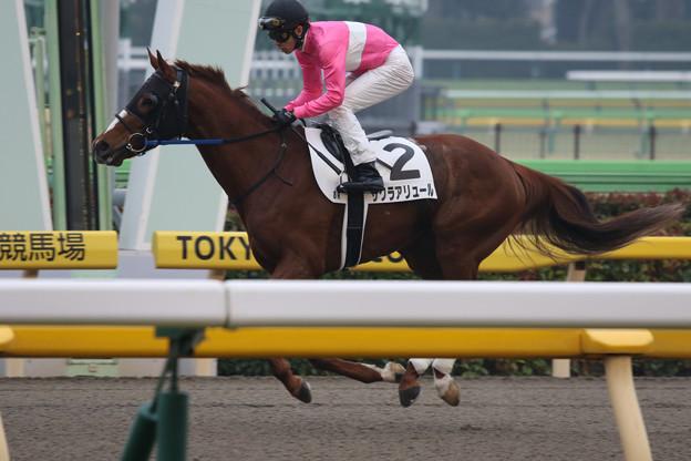 サクラアリュール 返し馬(20/02/16・8R)