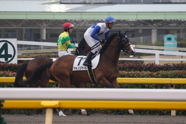 アキノスマート 返し馬(20/02/16・新馬戦)