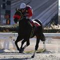Photos: シャドウチェイサー レース(19/12/31・大晦日特別)