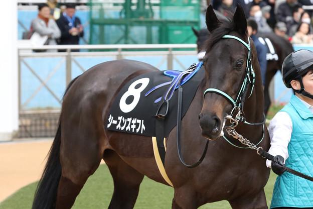 Photos: シーズンズギフト  パドック(20/01/26・若竹賞)