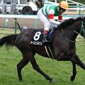 Photos: シーズンズギフト 返し馬(20/01/26・若竹賞)