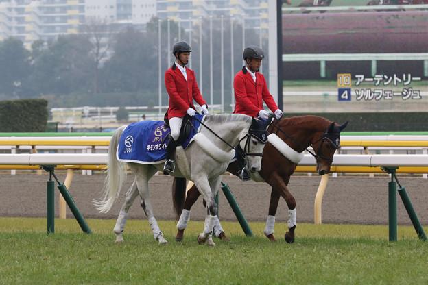 東京競馬場 誘導馬_1(20/02/16)