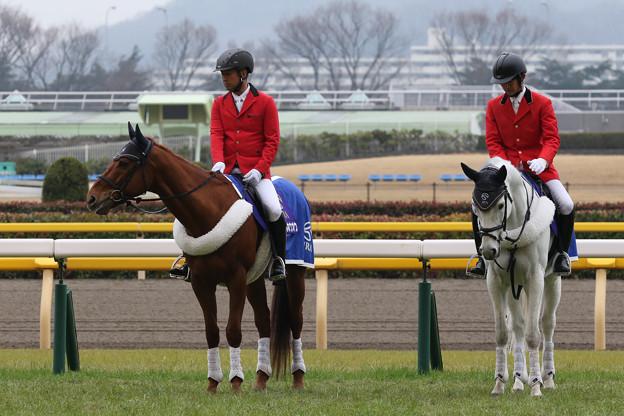 東京競馬場 誘導馬_3(20/02/16)