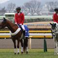 Photos: 東京競馬場 誘導馬_3(20/02/16)