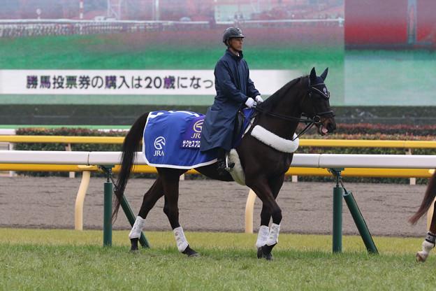 東京競馬場 誘導馬・サクセスブロッケン_5(20/02/16)