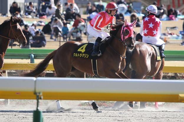 ウルトラマリン 返し馬(20/02/23・ヒヤシンスステークス)
