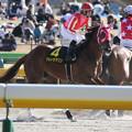 Photos: ウルトラマリン 返し馬(20/02/23・ヒヤシンスステークス)
