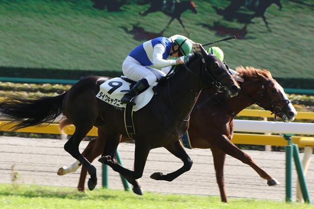 ダイワキャグニー レース(16/11/06・新馬戦)