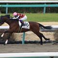 Photos: ヴォートルエロー レース(20/01/26・新馬戦)