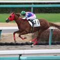 Photos: キングスバーンズ レース(19/12/21・新馬戦)