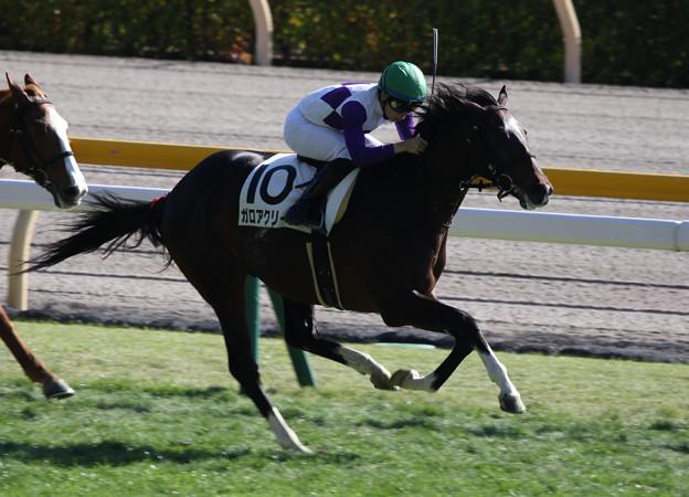 ガロアクリーク レース(19/11/17・新馬戦)